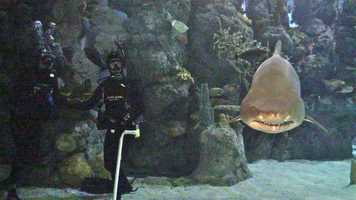 """7. Another """"Extreme Kellie"""" episode and one of my favorites: Scuba diving with sharks at the Denver Aquarium. Look at the teeth on this guy! I was so nervous I about sucked up all the oxygen in my tank."""