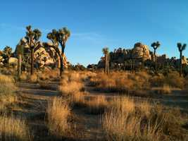 Riverside CountyVisitor-generated sales tax receipts: $xxxThings to do: Explore the Joshua Tree National Park desert.