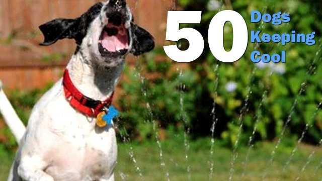 dogs-keeping-cool.jpg