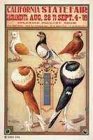 Birds of all types were shown at the State Fair, as is evident in this poster from 1909.