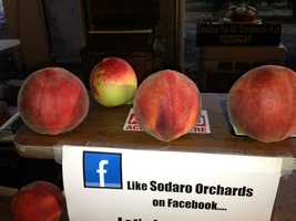 All will be just peachy this weekend in Marysville.