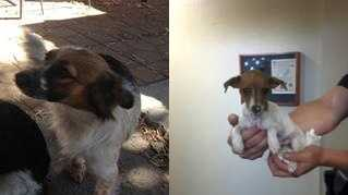 The viral dog is on the left. Parker is on the right (Aug. 1, 2013).