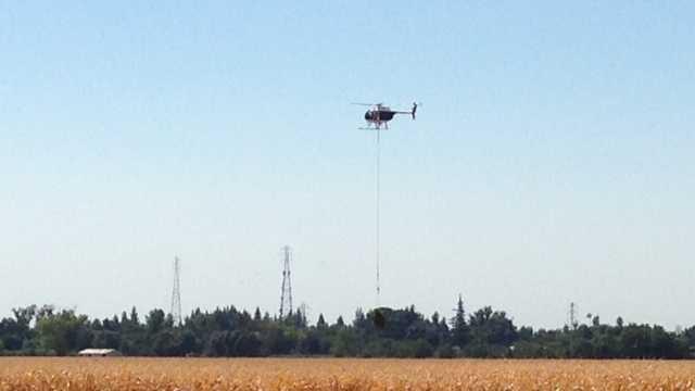 Natomas cornfield pot