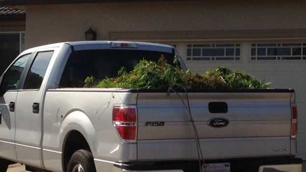 Sacramento Sheriff's deputies detained several people and seized a large amount of marijuana plants at two homes in the North Highlands and Antelope areas.