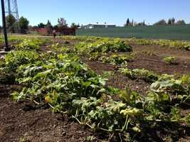 The garden includes a quarter-acre plot of land that will have a children's area, demonstration garden and orchard.