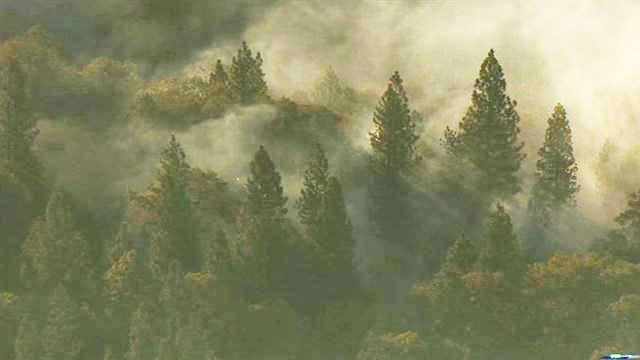 Foresthill-blurb-2.jpg