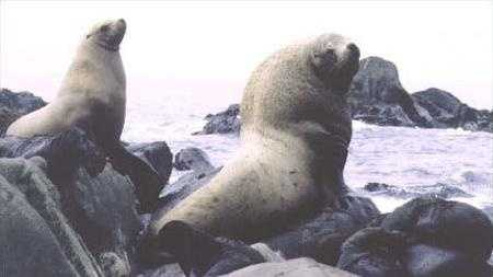 Sea Lions, generic.jpg