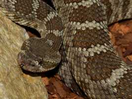 What: Snake Rattle & Roll: A Rattlesnake Birthday PartyWhere:  Splash Education CenterWhen: Sat 1pm-3:30pmClick here for more information on this event.