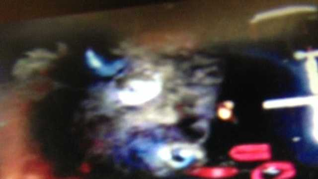 This is a photograph Tera Hazelton said showed the buffalo head that was left for her.