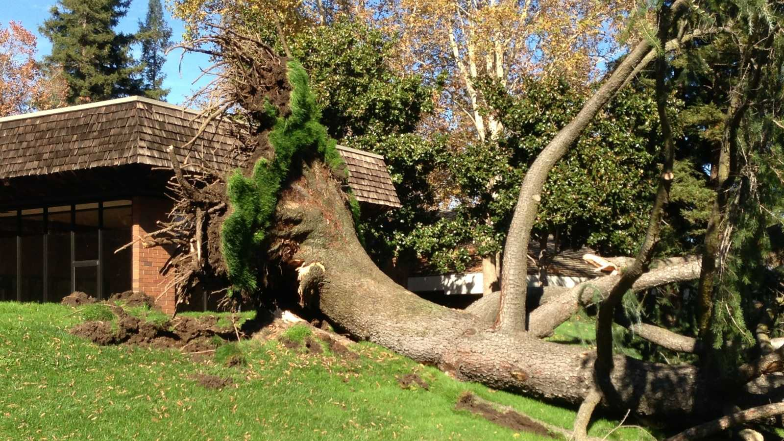 Fallen tree 1 112113.jpg