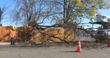 A large tree falls over on Hawthorne Street in Sacramento. (Nov. 21, 2001)