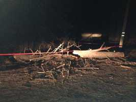 Tree falls in Dobbins. (Nov. 22, 2013)
