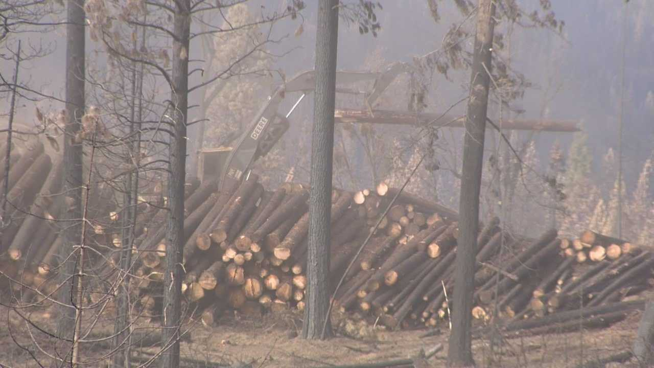 Lumber debate, what happens to trees damaged by rim fire?