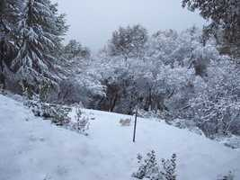 "This photo was titled ""Bruce and Jennie's front yard in Applegate"". (Dec. 7, 2013)"