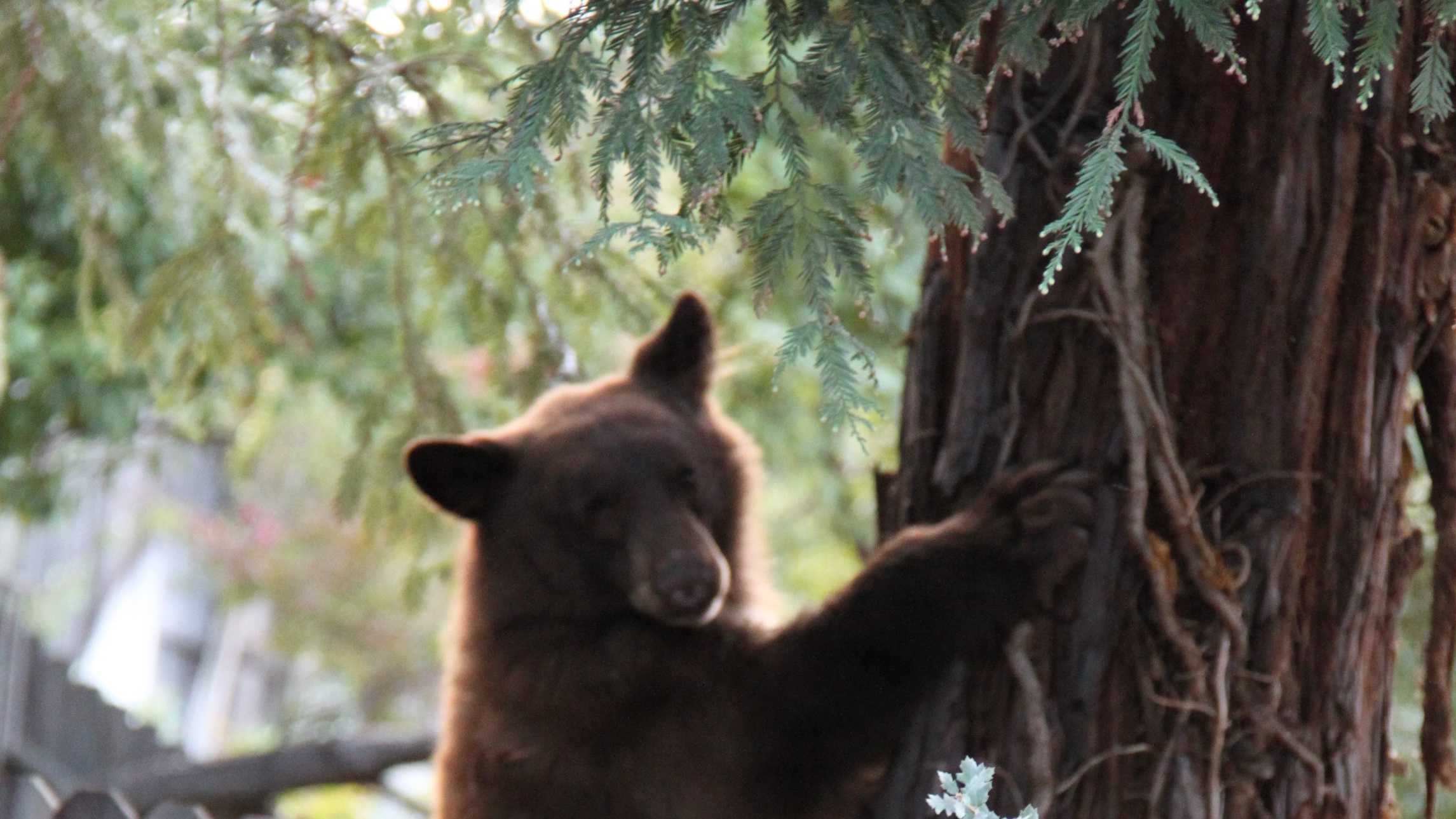 Bear-generic.jpg