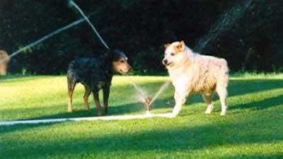 dogs, sprinklers
