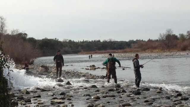 American River fishing, anglers 020514.jpg