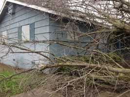 The latest storm brought a tree down on top of an abandoned house at the corner of Hogan Drive and Berg Avenue in Sacramento.