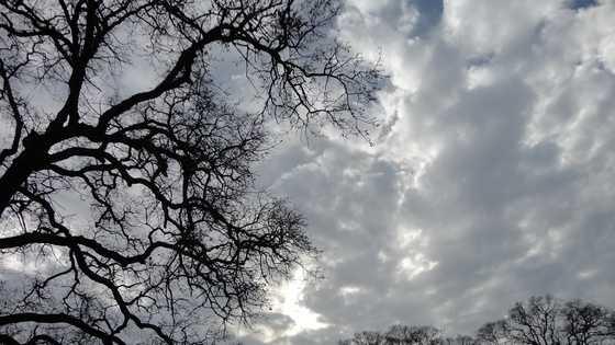 tree weather 042614.jpg