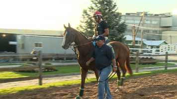 Kentucky Derby winner California Chrome is preparing for Preakness Stakes, where he will be a favorite to win.