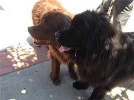 Kashkari's dogs are name Winslow and Newsome.
