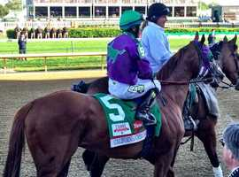 """11. The picture of a donkey on California Chrome's racing silks is the logo for his owner's racing operation called DAP Racing, short for """"Dumb Ass Partners."""" Purple and green are the favorite colors of the owners' wives, Carolyn Coburn and Denise Martin."""