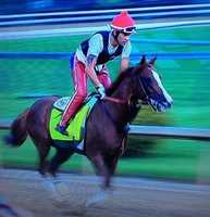 14. California Chrome traveled in a plane for the first time when he was flown in to Churchill Downs for the Kentucky Derby.