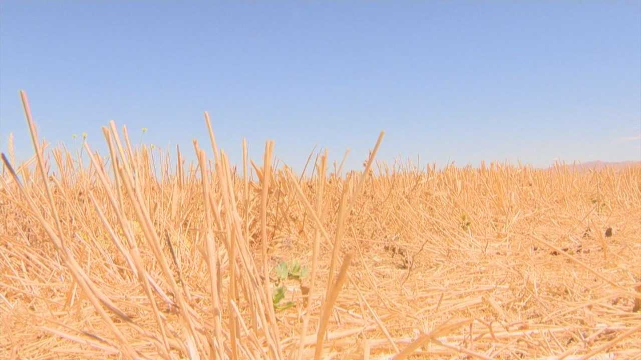 San Joaquin County extends state of emergency due to drought