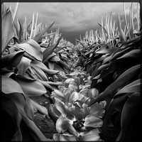 Flowers - 2nd place: © LEE ATWELL - Seattle, WA United States