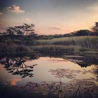 Sunset - 2nd place: © DANIELLE MILLAR - Waterkloof Heights, Gauteng South Africa