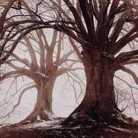 Trees - 3rd place: © MARIKO KLUG - Erding, Germany