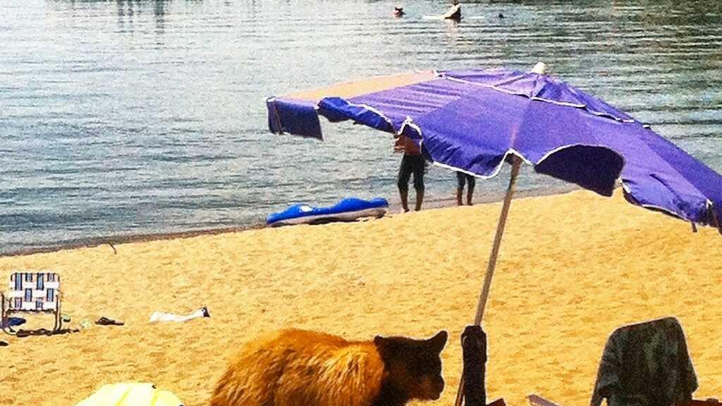 Bear on Beach Euthenized.jpg