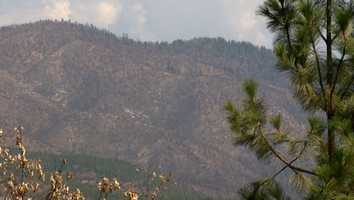 The Forest Service has dropped straw on the most fragile parts of the Rim Fire to prevent mudslides, but has not yet begun salvaging dead trees or replanting new ones.