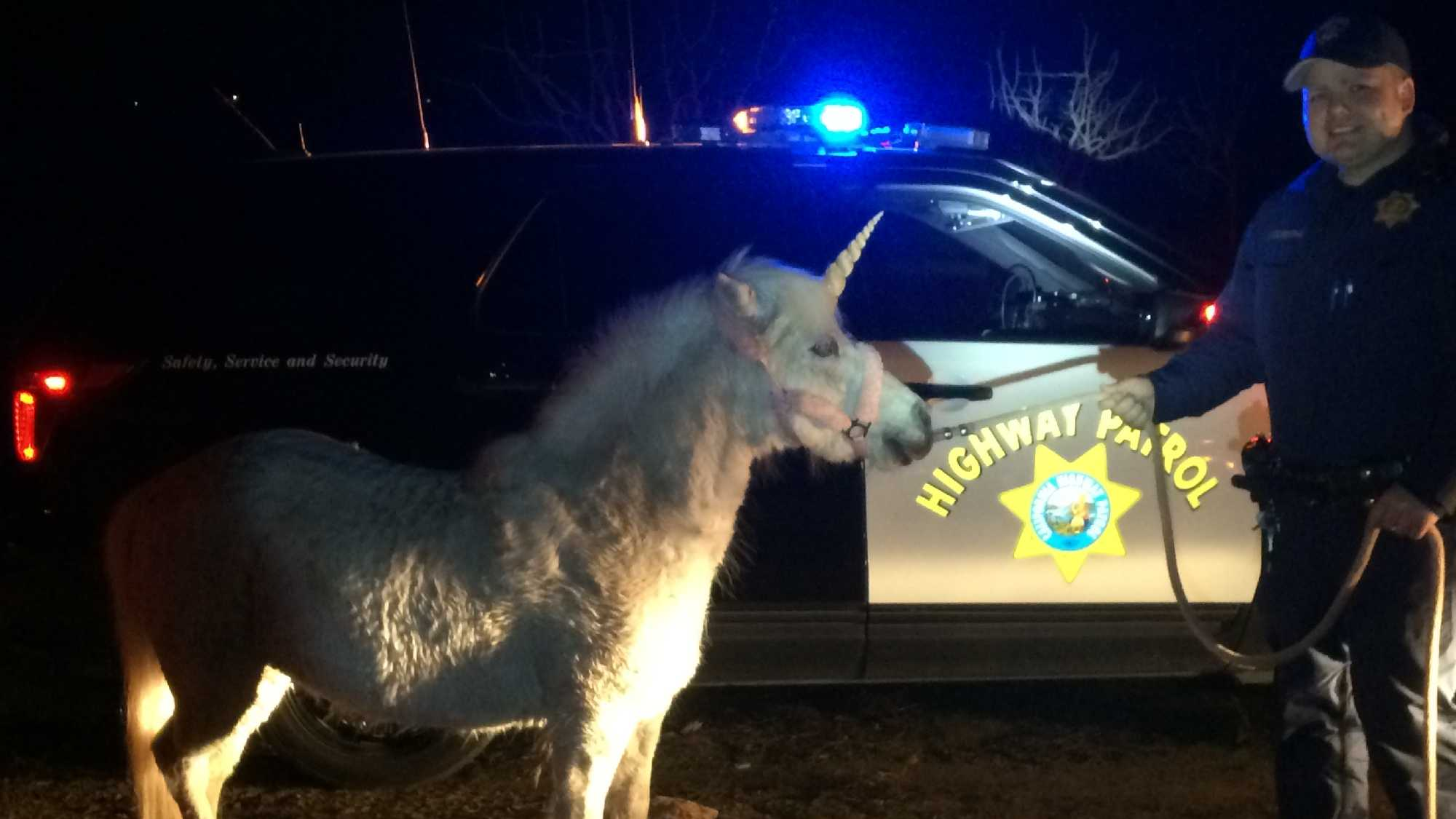 A pony dress like a unicorn was captured Wednesday, Feb. 25, 2016, by California Highway Patrol Officers.