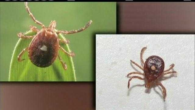 Case of Rocky Mountain spotted fever investigated