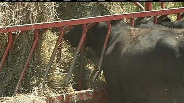 Drought leaves farmers with few options