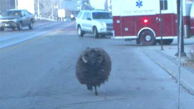 img-Raw Video Police chase loose ram