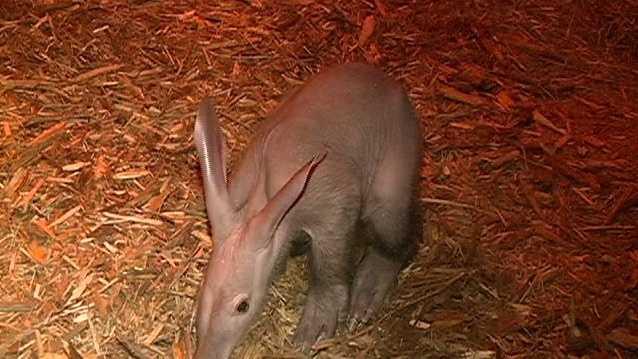 aardvark - 086_3541_01 01.jpg