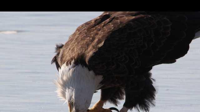 Eagles - 01.18.13