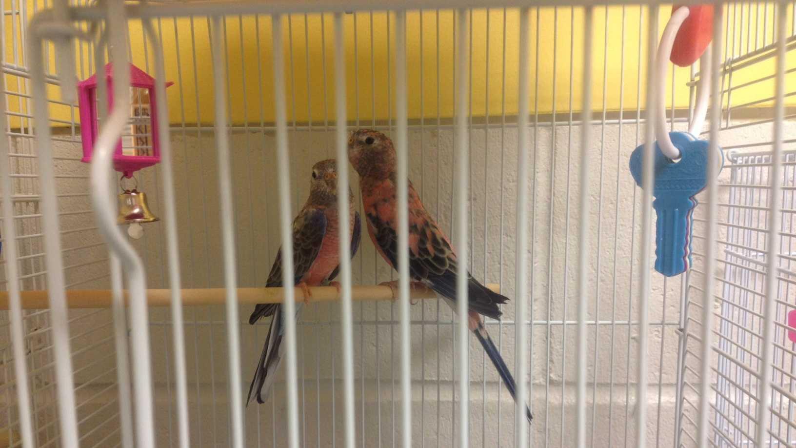 Bird cruelty