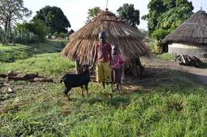Goats tied to a tukul, a South Sudanese home built of sticks and mud with grass roof