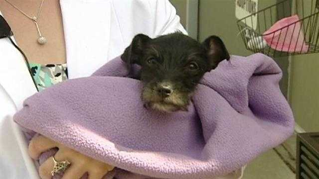 Puppy survives month inside impounded car