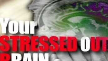 stressed brain