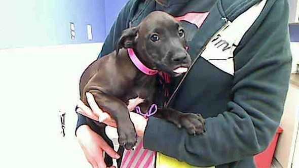 humane-society-dog.JPG
