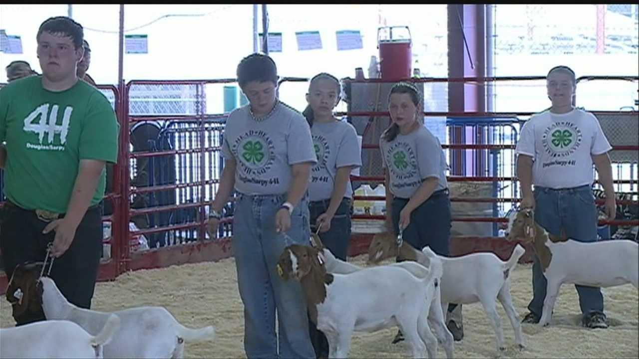 Participants prep for Sarpy County Fair