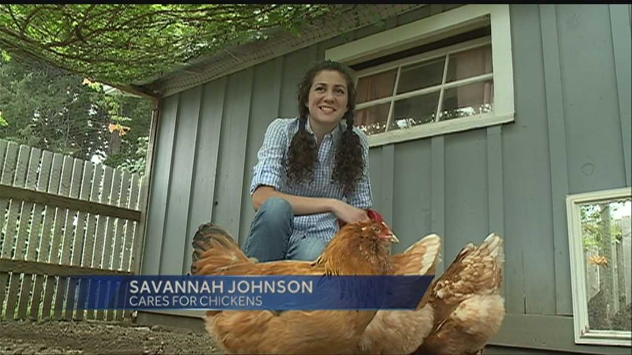 Family fights city for therapy chickens