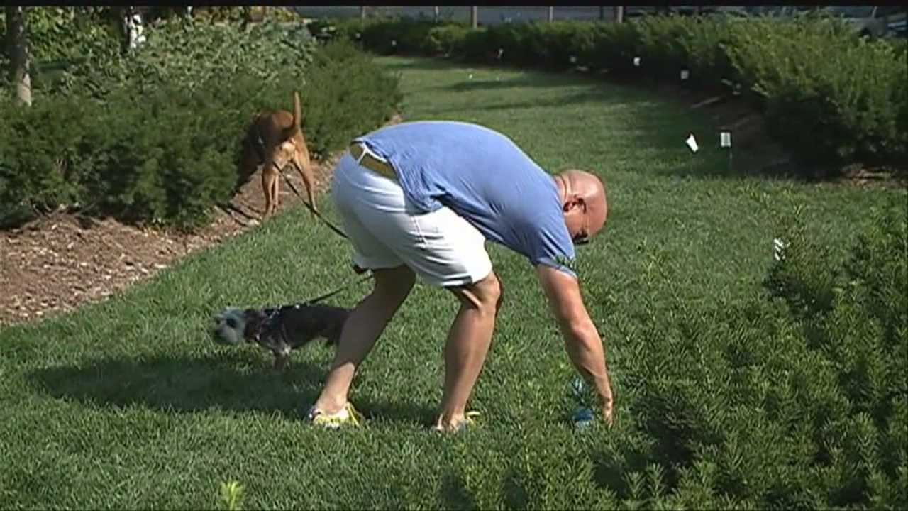 New policy at Midtown Crossing tests dog DNA