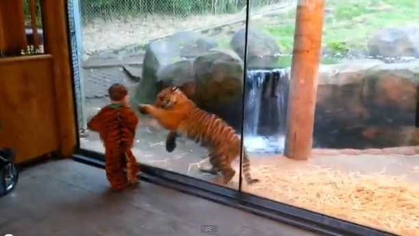 YouTube tiger