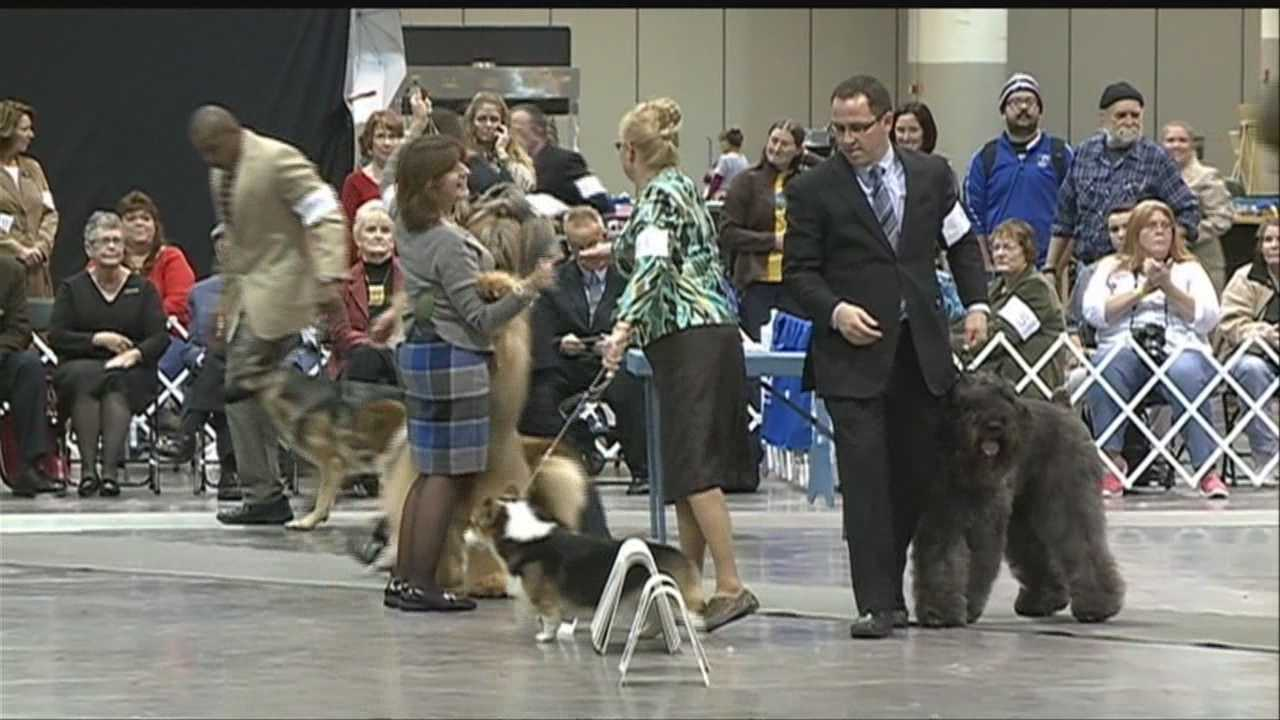 Dog eat dog competition at the Council Bluffs Kennel Club Lewis and Clark Dog Show