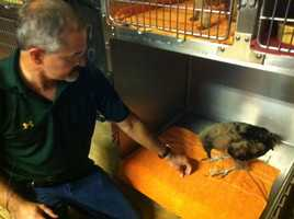 Dr. Gary Cox's with his buzzard at his vet clinic in Sallisaw.